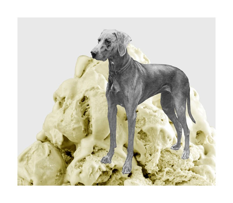 Eugenio Rivas ICECREAM DOG 8