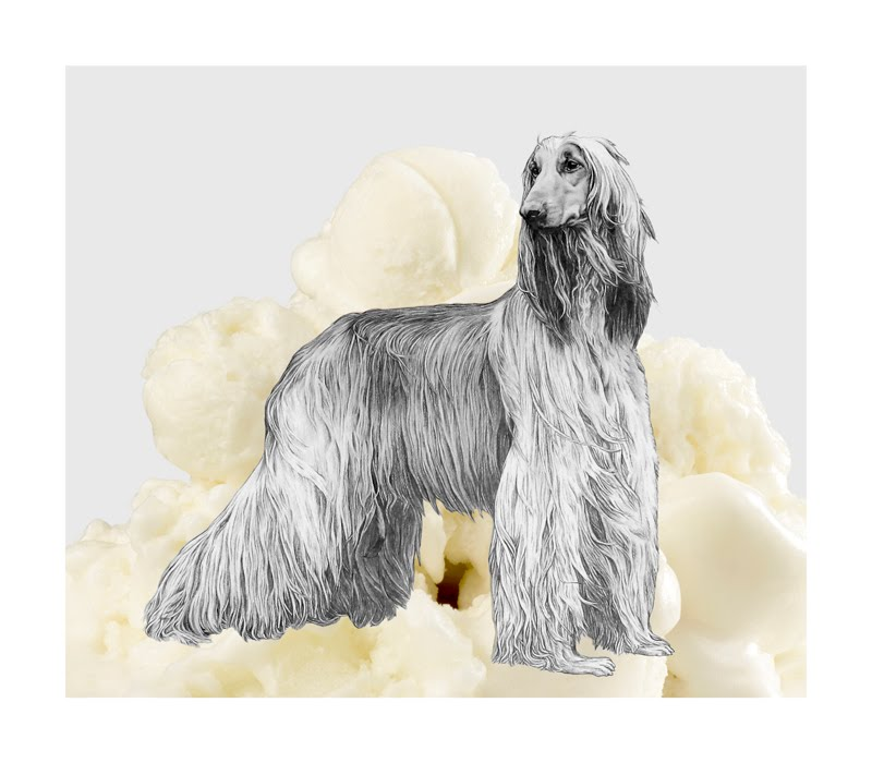 Eugenio Rivas ICECREAM DOG 9